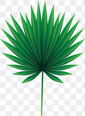 Green Palm Leaves - Leaf Arecaceae Asian Palmyra Palm Euclidean Vector PNG