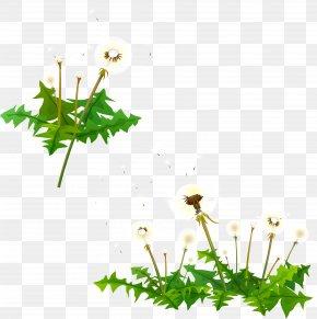Leaf - Desktop Wallpaper Plant Stem Leaf Computer Flower PNG