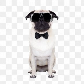 Dog Wearing Sunglasses - Puggle Sunglasses Stock Photography Puppy PNG