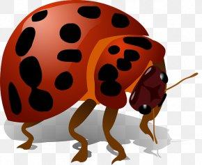 Bug - Beetle Ladybird Clip Art PNG