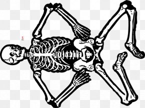 Skeleton Man - Human Skeleton Anatomy Human Body Skull PNG