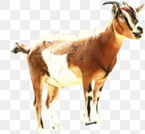 Sheep Clip Art Russian White Goat Barbari Goat PNG
