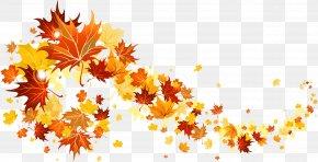 Fall Leaves Transparent Picture - Autumn Leaf Color Clip Art PNG