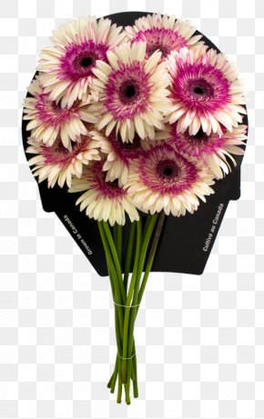 Flower - Transvaal Daisy Floral Design Cut Flowers Flower Bouquet PNG