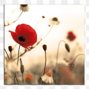 Poppy - Armistice Day Studio Fitness: Victoria November 11 First World War Public Holiday PNG