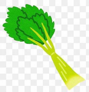 Leaf Vegetable Plant - Green Vegetable Plant Leaf Vegetable PNG