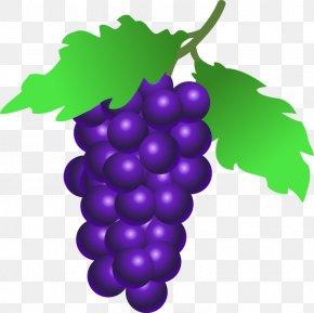 Grapes Clip Art - Common Grape Vine Wine Clip Art PNG