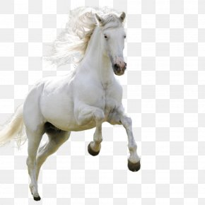 Horse - Horse High-definition Television Android Wallpaper PNG