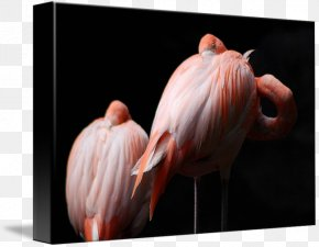 Flamingo Painting - Gallery Wrap Canvas Art Feather Printmaking PNG