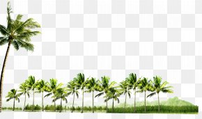 Palm Trees - Coconut PNG