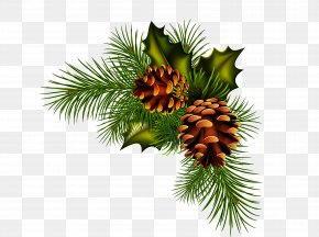 Pine Cone Material - Pine Spruce Fir Conifer Cone PNG