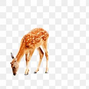 Deer - Deer Giraffe Computer File PNG