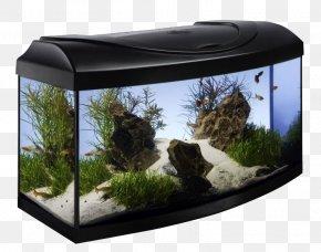 Aqua Design Amano - Aquarium Filters Fishkeeping Tetra Ceneo S.A. PNG