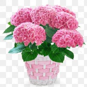 Flower - French Hydrangea Carnation Cut Flowers Flowerpot PNG