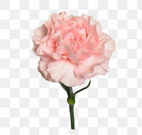 Flower - Garden Roses Цветочный магазин STUDIO Flores Flower Bouquet Cabbage Rose PNG