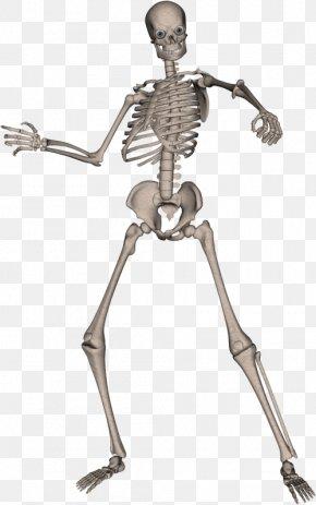 Skeleton Image - Human Skeleton Computer File PNG