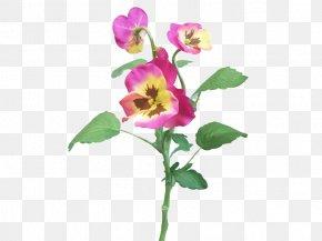 Violet - Rose Family Violet Cut Flowers Plant Stem Petal PNG