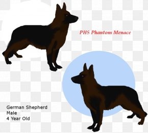 German Shepherd Head - Ormskirk Terrier Australian Kelpie German Shepherd Australian Cattle Dog Razas Nativas Vulnerables PNG