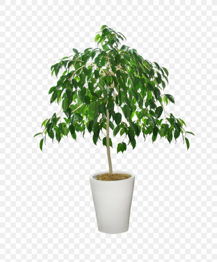Flower Pot, PNG, 967x1168px, Flowerpot, Bonsai, Branch, Cultivo, Dots Per Inch Download Free
