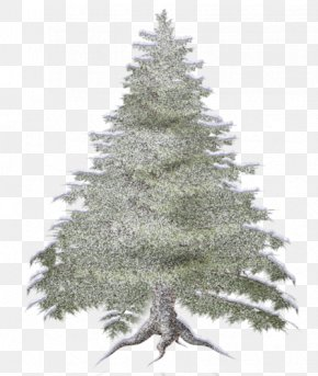Forest - Spruce Forest Tree Clip Art PNG