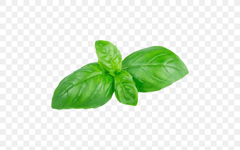 bay leaves vs basil