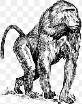 Orangutan Vector - Mandrill Ape Primate Drawing Clip Art PNG