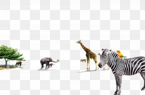 Animal Zebra - Quagga Giraffe Zebra Animal PNG