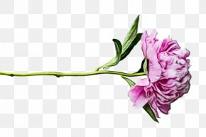 Plant Stem Lisianthus - Flower Flowering Plant Plant Cut Flowers Pink PNG
