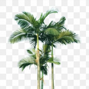 Coconut Tree - Coconut Arecaceae Computer File PNG