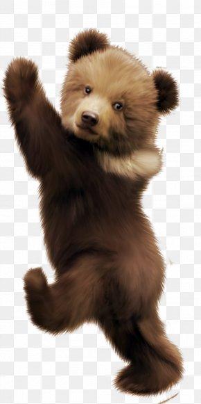 Bear - Brown Bear German Spitz Klein Polar Bear Clip Art PNG