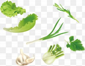 Vector Green Vegetables Lettuce Parsley Garlic - Leaf Vegetable U7dd1u9ec4u8272u91ceu83dc Salad PNG