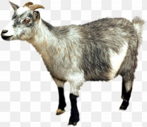 Goat - IPhone 6 Plus Altai Mountain Goat Sheep PNG