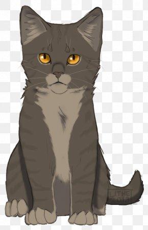 Kitten - Kitten Korat American Wirehair Tabby Cat Whiskers PNG