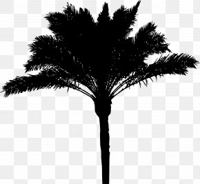 Palm Tree - Arecaceae Tree Date Palm Woody Plant PNG