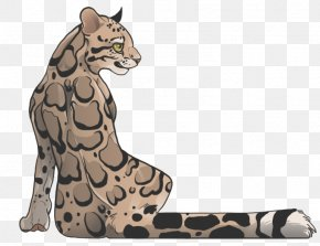 Easy Kitty - Clouded Leopard Felidae Drawing Snow Leopard PNG