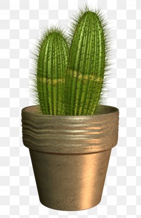 Cactus - Flowerpot Cactaceae Bonsai PNG