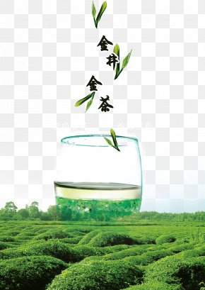 Green Tea Leaves Background Material - Green Tea Longjing Tea Camellia Sinensis PNG