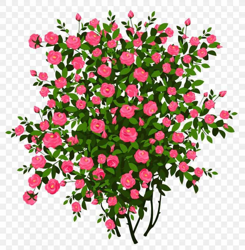Rose Shrub Flower Clip Art, PNG, 5002x5096px, Rose, Annual Plant, Artificial Flower, Branch, Color Download Free