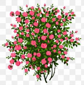 Pink Rose Bush Clipart Picture - Rose Shrub Flower Clip Art PNG