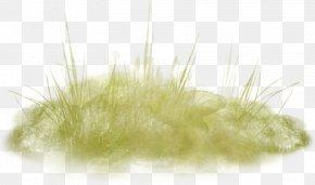 Green Grass - Close-up PNG
