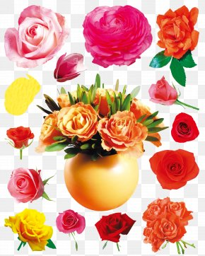 Orchid Hibiscus Flowers Chrysanthemum Flowers Layered Daquan - Flower Beach Rose Rosa Chinensis PNG