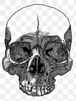Skull - Skull Drawing Transparency And Translucency Clip Art PNG