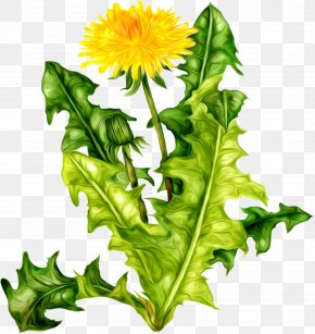 Dandelion - Flower Icon Dandelion Clip Art PNG