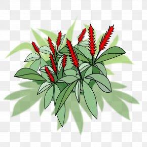 Niaopen - Flowering Pot Plants Red Ginger Flowering Plant Clip Art PNG