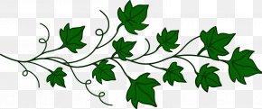 Vine Cliparts Transparent - Vine Ivy Clip Art PNG