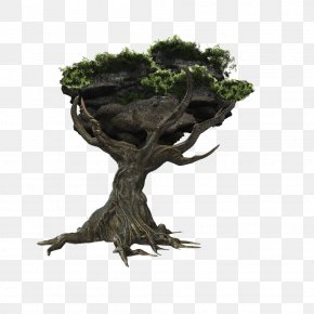 One Big Tree - Tree PNG