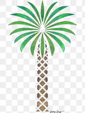 Date Palm - Arecaceae Date Palm Tree Drawing Woody Plant PNG