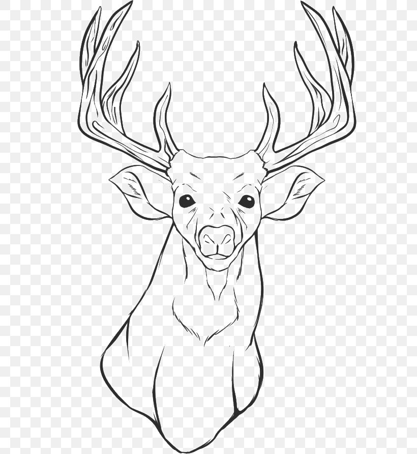 White Tailed Deer Colouring Pages Coloring Book Drawing Png