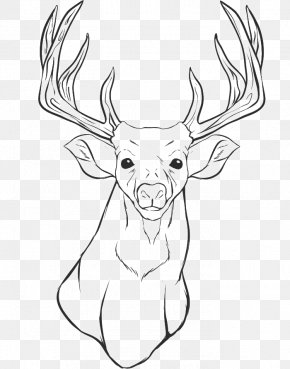 Fairy Tale Material - White-tailed Deer Colouring Pages Coloring Book Drawing PNG