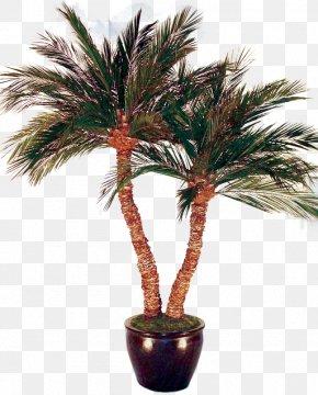 Date Palm - Asian Palmyra Palm Arecaceae Date Palm Tree Bonsai PNG